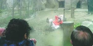 Pria China Jadikan Dirinya sebagai Makanan Harimau